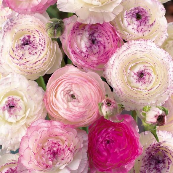 Photo courtesy Mandala Floral