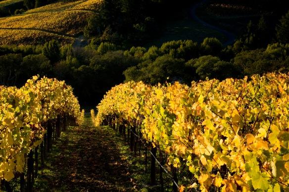 Our Pastorale Vineyard in Somona