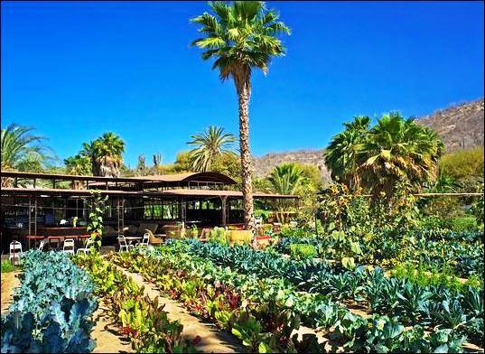 The Garden at Flora Farm, photo by Chris Sands
