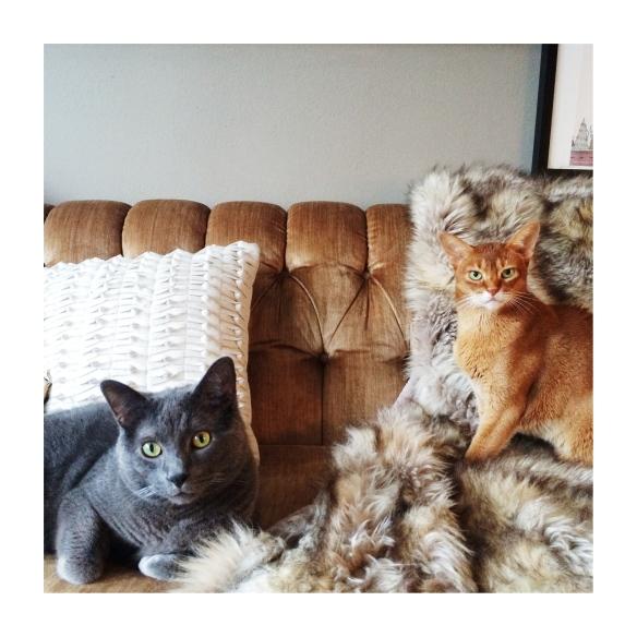 Edytas Cats